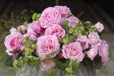 Rosengräfin_Marie_Henriette_Bouquet