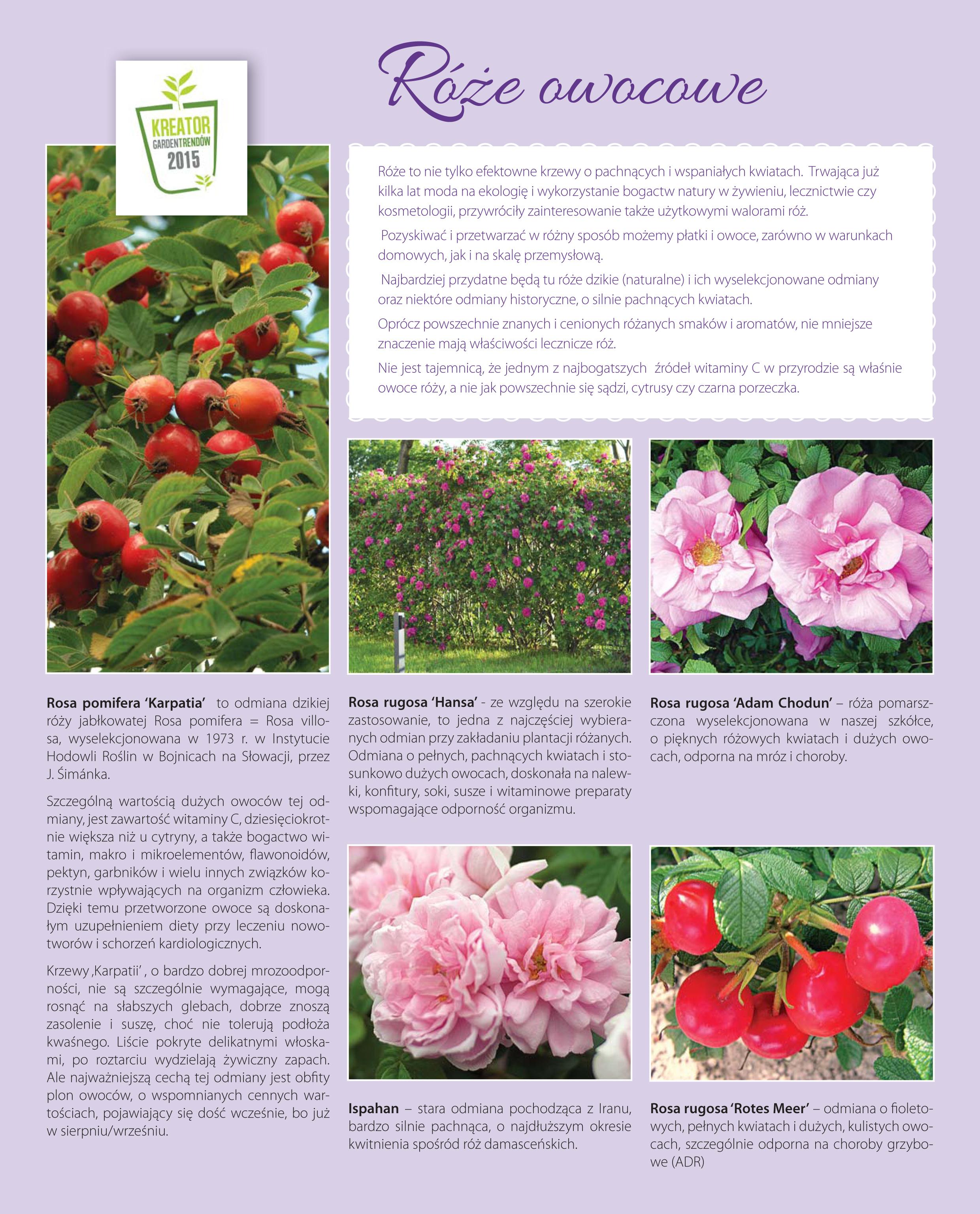 Roze owocowe.indd