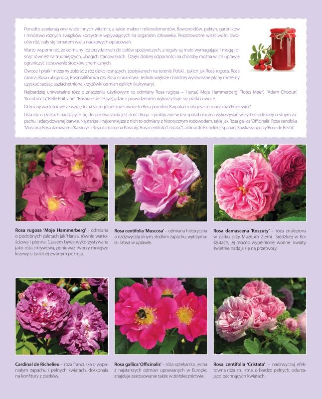Roze owocowe-3