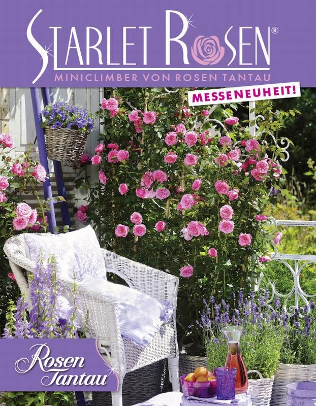 Starlet Rosen®
