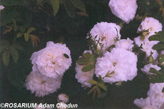 Madame-Plantier5