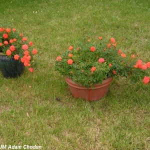 Mini Orange4