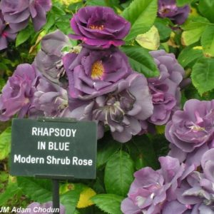 Rhapsody in Blue1