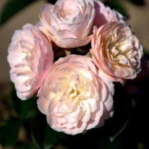 bouquet-parfait1
