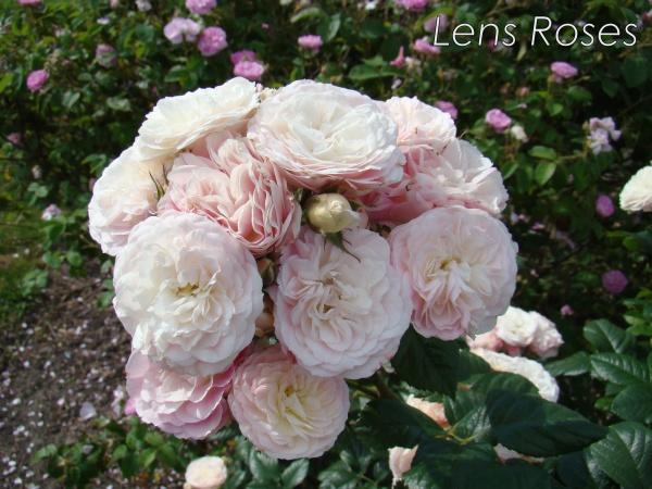 bouquet-parfait2