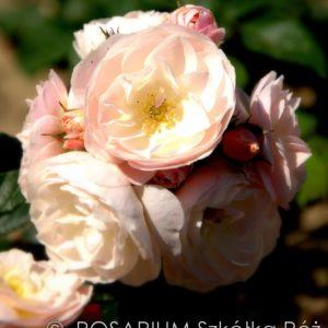 bouquet-parfait3