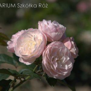bouquet-parfait4