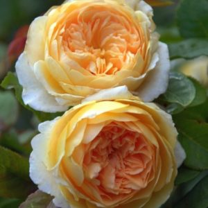 crown-princess-margareta1