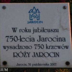 jarocin7