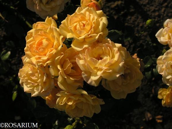 yellow-fairy1
