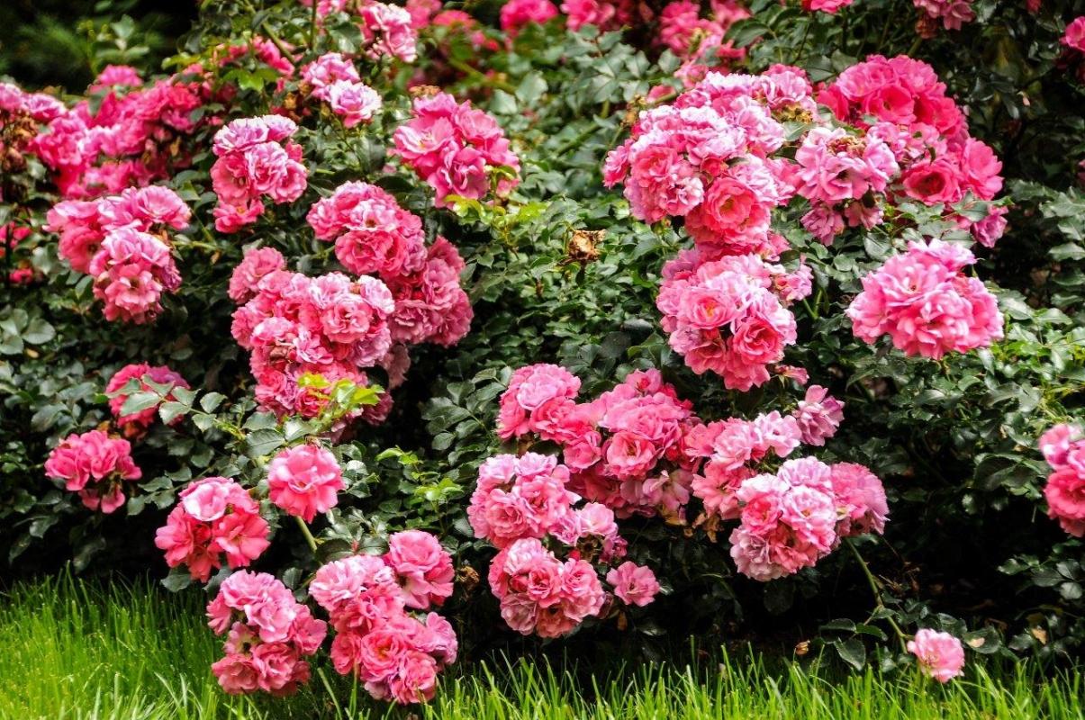 Pola-Różane013.jpg