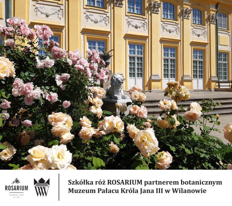 Rosarium – nowy partner botaniczny Muzeum Pałacu Króla Jana III w Wilanowie